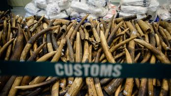 DNS-vizsgálatokkal buktatták le a három legnagyobb elefántcsontcsempész-kartellt