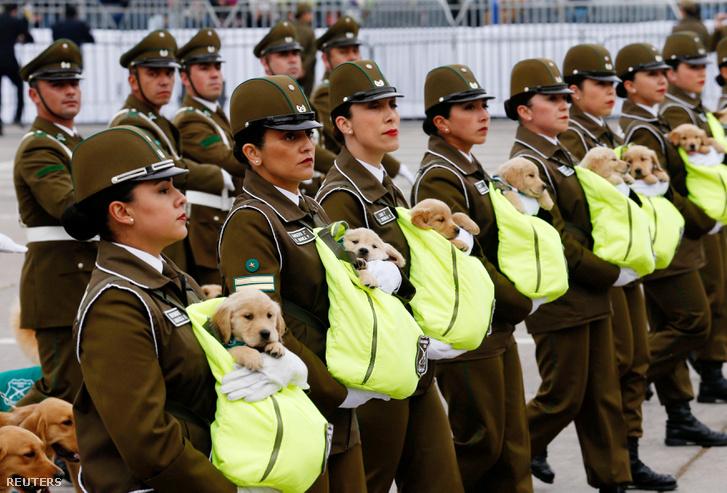 Rendőrtisztek viszik a 45 napos kutyakölyköket Santiagóban az éves katonai felvonuláson 2018. szeptember 20-án