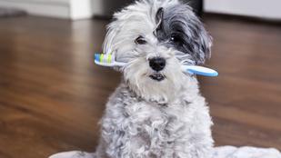 A 8 legsúlyosabb tévhit a fog- és szájápolásról