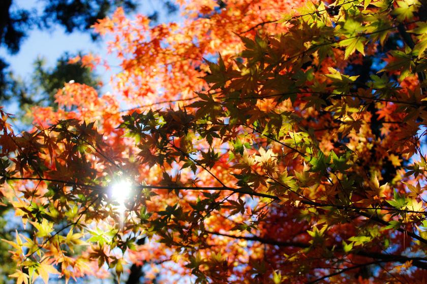 levelek-napfeny