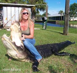 Illusztráció. Ez a krokodil egy másik krokodil, ráadásul már nem is él.
