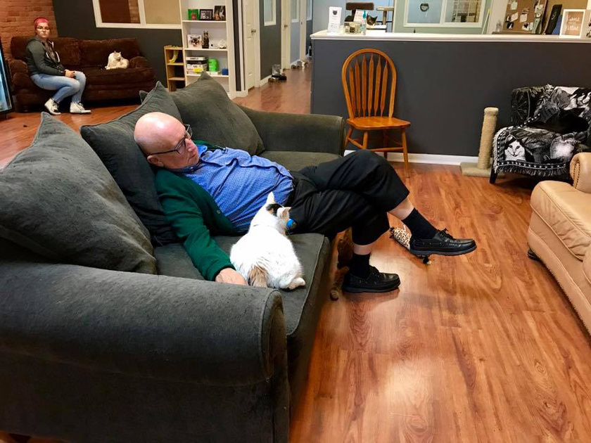 Néhány napja a Safe Haven posztolt pár fotót Terry Lauermanról és a cicákról a Facebook-oldalára, és a sztori hamarosan bejárta az internetet.