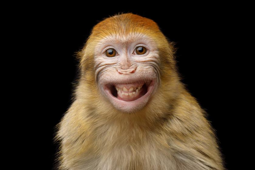 Ilyen hangja lenne egy majomnak, ha tudna beszélni: kissé hátborzongató