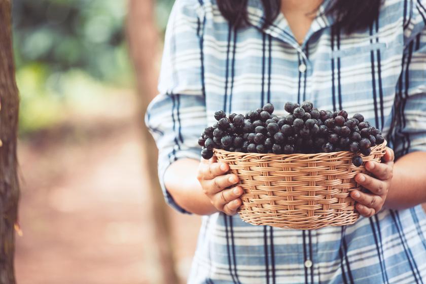 4 magyar borásznő, aki csodálatos borokat készít
