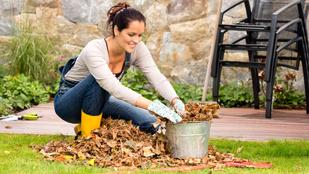 7 fontos teendő, amit ősszel kell elvégezned a kertben
