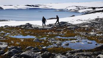 A klímaváltozás tönkreteszi az antarktiszi mohát