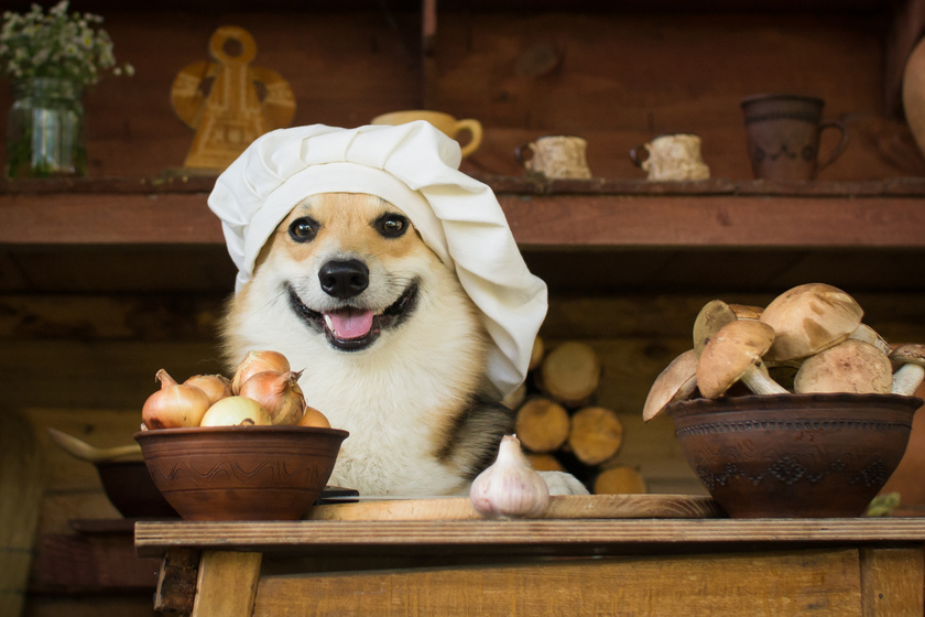 kutya séf konyha