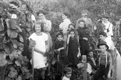 szüret csoport 1919