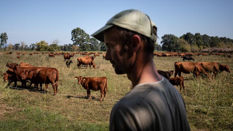 A jó magyar marhát a törökök eszik