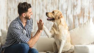 Honnan tudod, hogy szeret a kutyád?