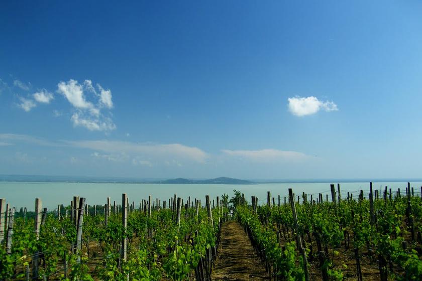 9 gyönyörű szőlős Magyarországon, ahová már a látvány miatt is érdemes elmenni