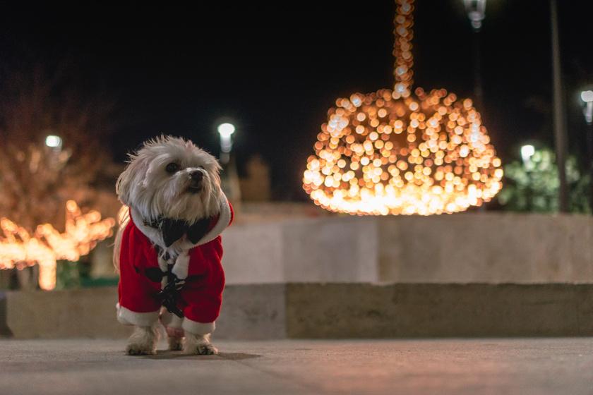 A gazdik elmentek otthonról, elszabadult a pokol: karácsonyi ámokfutás a lakásban