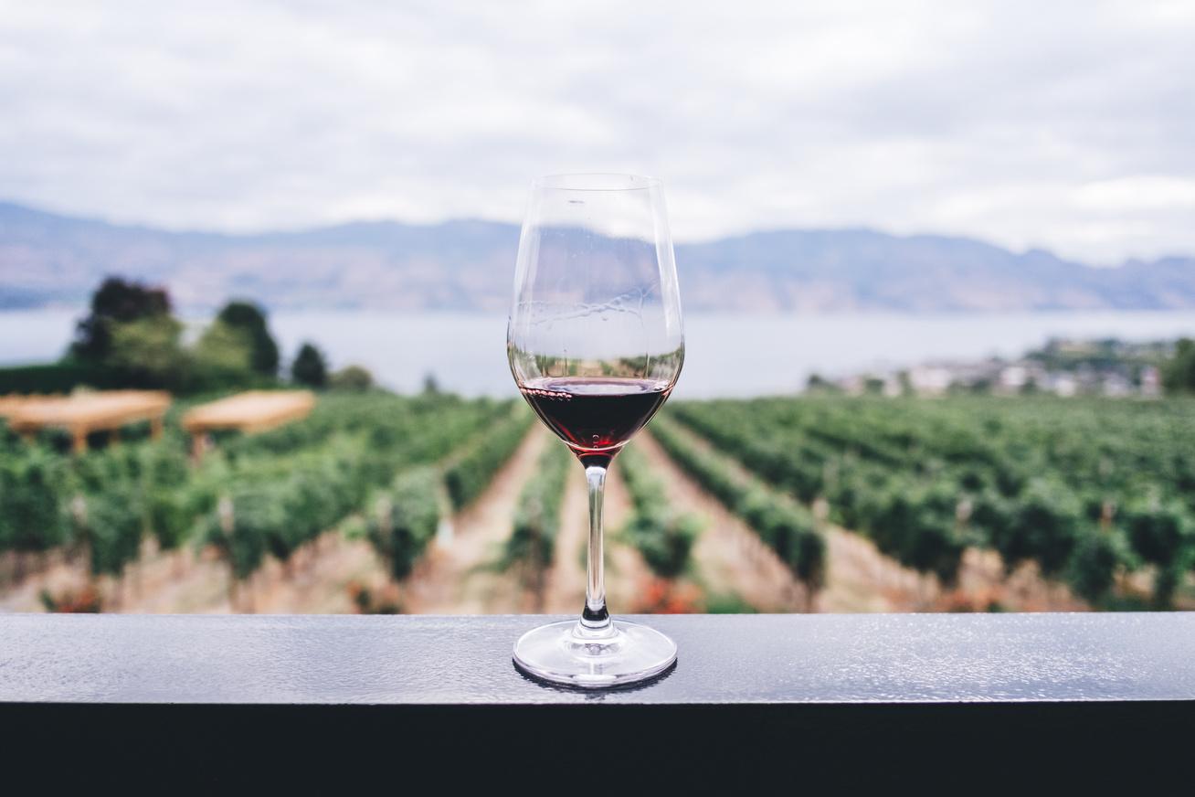 bor borvidék táj ősz