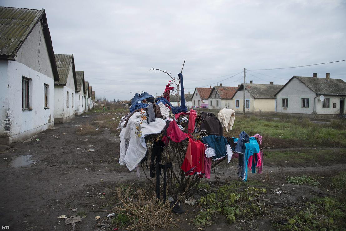 Bokorra dobott ruhák száradnak Tiszavasváriban, a Széles úti cigánytelepen 2012. december 1-jén.
