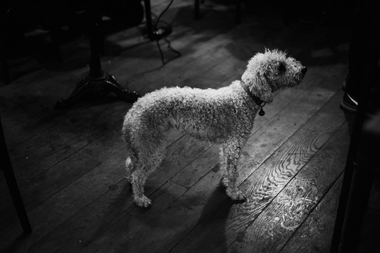 """""""Sok kutyát ismerek már a Kisüzemből, de őt még nem láttam. Tetszett, hogy ilyen  bolyhos és furcsa alakú."""""""
