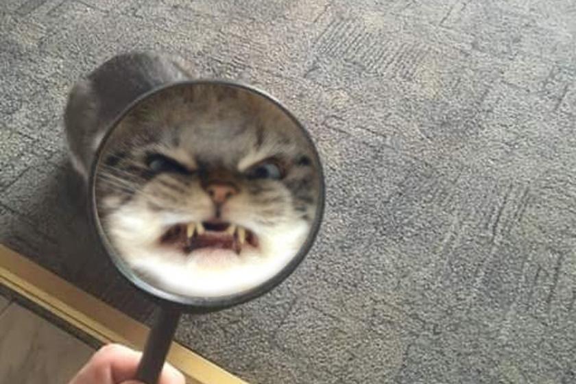 Pokoli kutyák és macskák: ijesztőbbek, mint egy horrorfilm