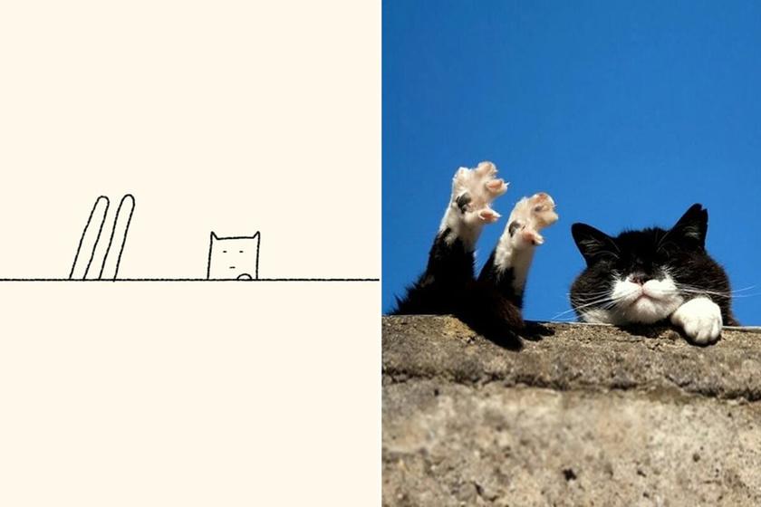Ez a legjobb macskás Instagram-oldal: akkor is vicces, ha nem vagy cicarajongó