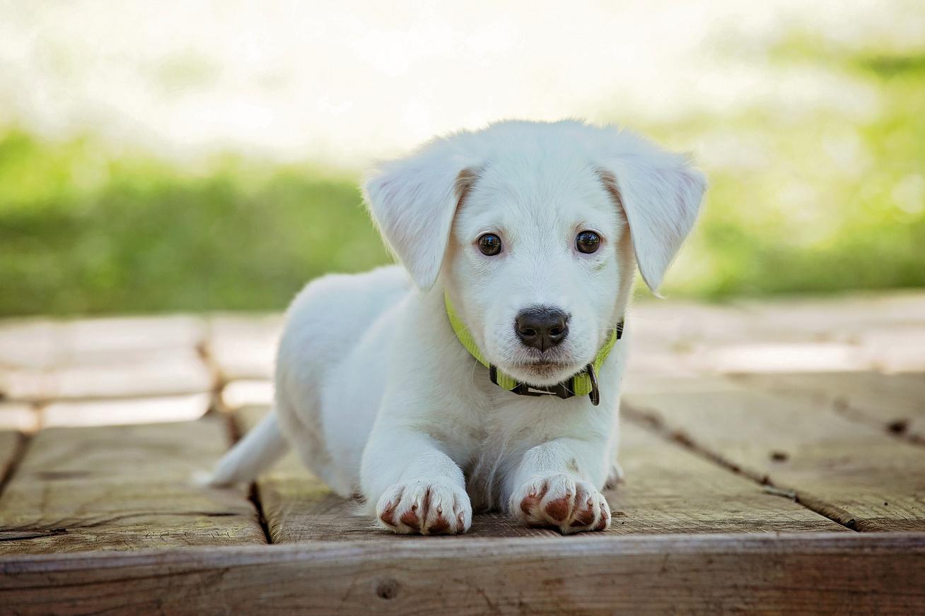 okos kutya