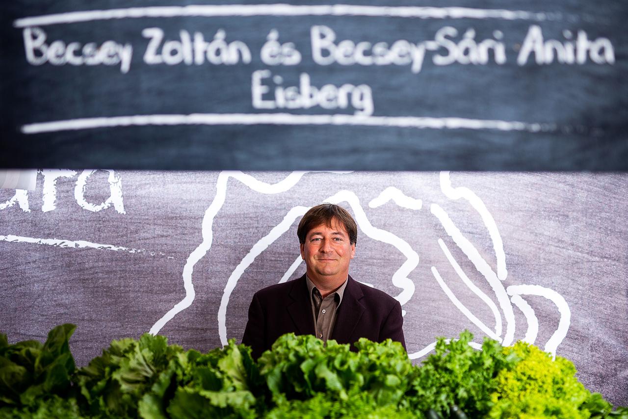 Magyarországon körülbelül harminc évvel ezelőtt kezdődött a salátaforradalom, az első McDonald's megjelenésével. Ekkor jelent meg a jégsaláta, a madársaláta, a lollo rosso és a többi, melyek ma már hétköznapi zöldségeknek számítanak itthon is. Addig csak a tárolható növényeket fogyasztottuk, mint amilyen a káposzta, répa, cékla, hagyma. A salátát tavasztól őszig Becsey Zoltán termeli a Mekinek az Alföldön. Aztán amikor az időjárási viszonyok zordabbra fordulnak itthon, a cég délebbre fekvő európai országokból (pl. Spanyolországból, Franciaországból, Olaszországból, Törökországból) vásárolja a salátát és a paradicsomot.