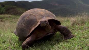 123 óriásteknőst loptak el Galápagos szigetén