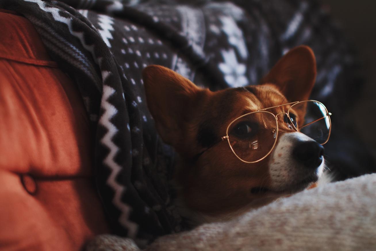 kutya szemüvegben
