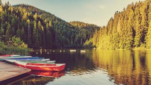 Tanulni kell az őszi fákat is, avagy mit üzen az erdő az emberi lélekről?