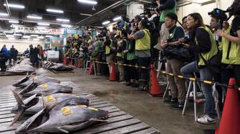 Bezárt a világ legnagyobb halpiaca, a japán Cukidzsi