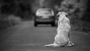 Egy kutyát kidobni olyan, mint elhagyni a gyereked