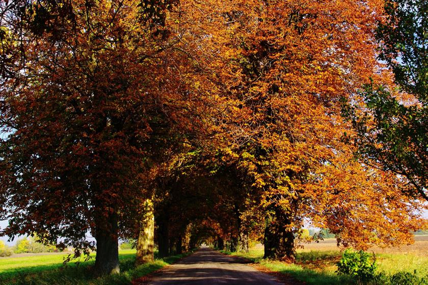 10 magyar fasor, ami alatt át kell sétálni egyszer az életben: sárga pompában a legszebbek