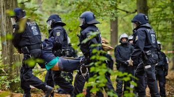 1 millió eurót ajánlott fel egy félig elpusztított erdőért az Ecosia