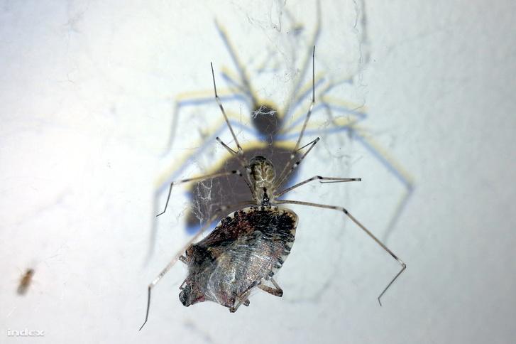 Szép fogás, pók pajtás!