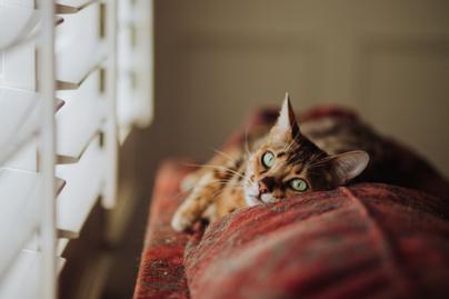 cica macska alvás (2)