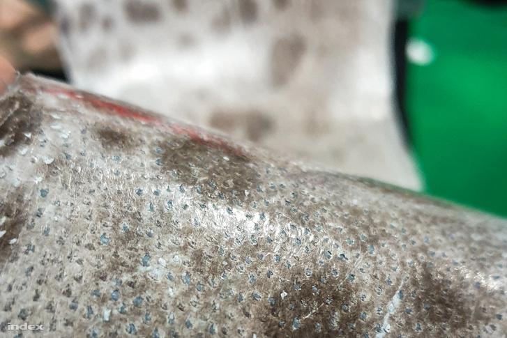 Előbb bújnék az izlandi Atlantic Leather által legyártott halbőrbe, aminek egyáltalán nincs halszaga, mint gombafonalakba