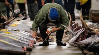 Ahol patkányok között árulták a százmilliós halakat