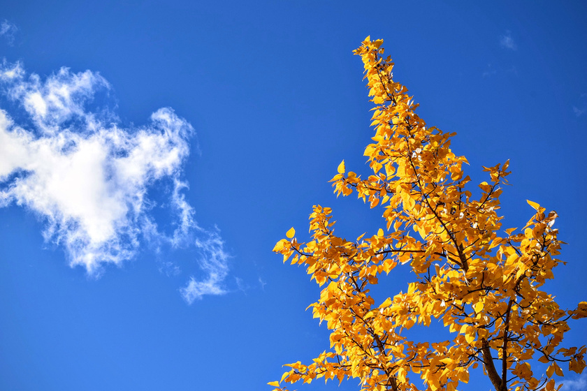 Lassan, de biztosan visszatér az ősz: fokozatos lehűlés kezdődik a héten