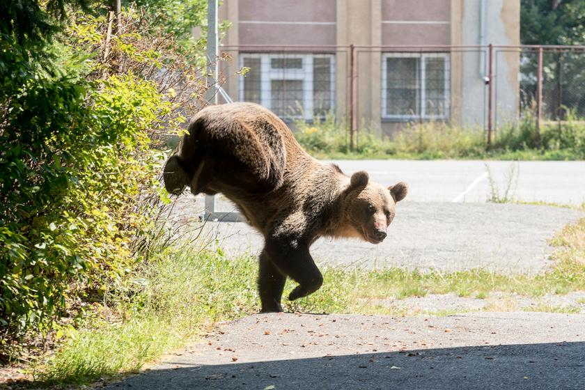 Egy ember-medve randevú lehetséges kimenetelei: így kerüld el a legrosszabbat