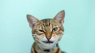 Egy nő életét megmentette, hogy a bunkóságáról ismert macskája kedvesen kezdett viselkedni