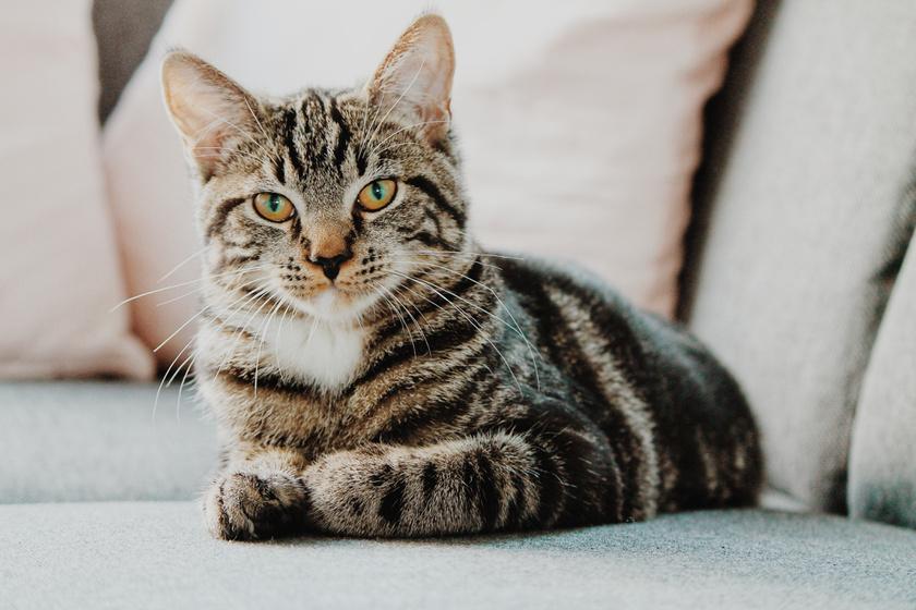 macska cica (4)