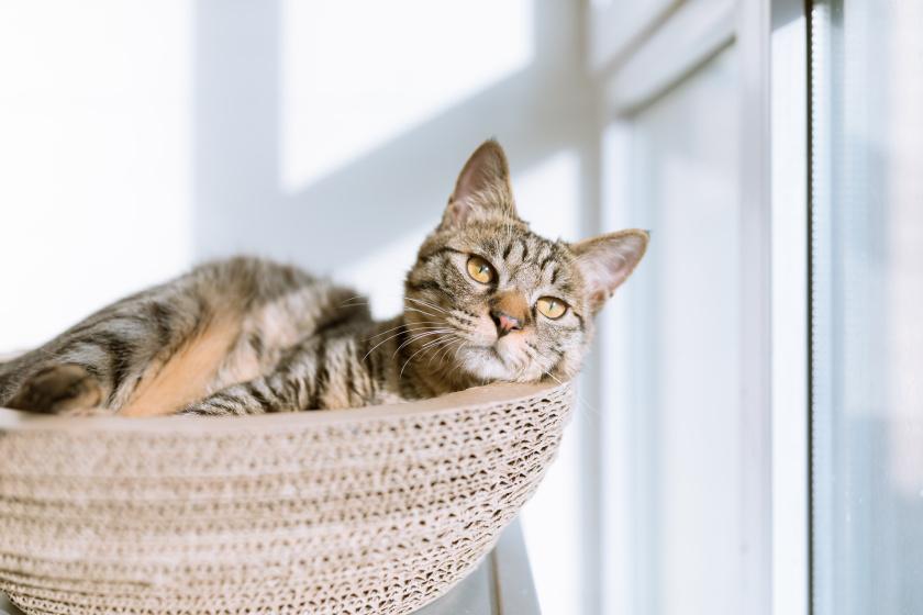 macska cica (3)