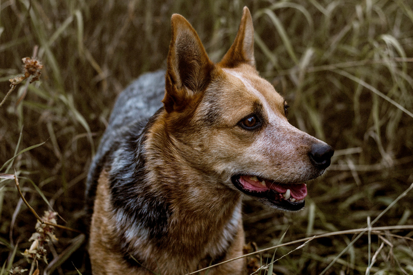 Bámulatos dolog derült ki az ember és a kutya kapcsolatáról - Régebbre nyúlik vissza, mint hinnéd