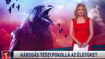 Alig szerepelnek nők a hírműsorokban