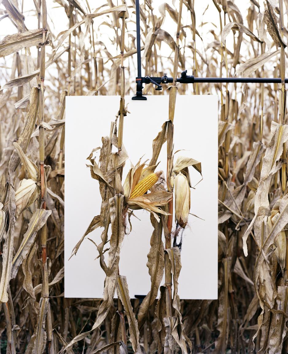 Monsanto-földek                         A francia-venezuelai Asselin nem élből ellenzi a génmanipulációt és nem összeesküvés-elméleteket gyárt a politikusoknál nagy pénzekkel lobbizó, a mezőgazdaságot bekebelező Monsantóról. Szükség van ellenőrzött, független kísérletekre a GMO-val kapcsolatban, mert ilyeneket valójában csak az érdekelt cégek végeztek, ráadásul csak rövid- és középtávon, miközben azt nem tudjuk, milyen következményekkel járhat a technológia 50-100 éves távlatban.