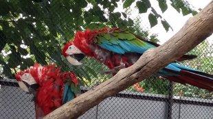 Mennyibe kerül egy ara papagáj?