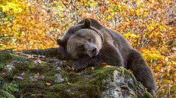 Agyonverte a rájuk támadó medvét egy román házaspár
