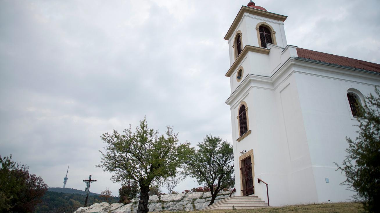 Csavarodott törzsű mandula lett az Év Fája: egy pécsi templom előtt áll