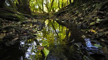 A fák gombákon keresztül beszélgetnek egymással