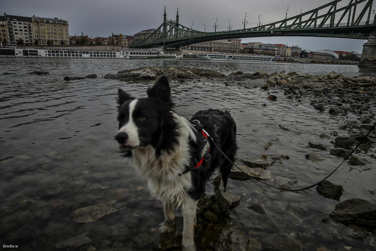 Az Ínség-szikla 95 centis vízállásnál bukkan a felszínre. Októberben még sosem volt látható. Budapesten hétfő reggel 50 centi volt a folyó vízszintje, ez néhány centivel már meghaladja a múlt héten mért negatív rekordot.
