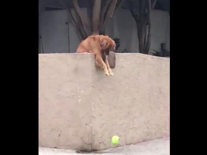 kutya labda