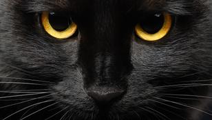 Sátánista szeánszok miatt veszélyben a fekete macskák