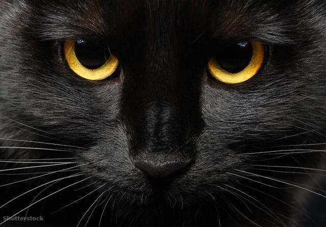 Sátánista szeánszok miatt veszélyben a fekete macskák - Dívány